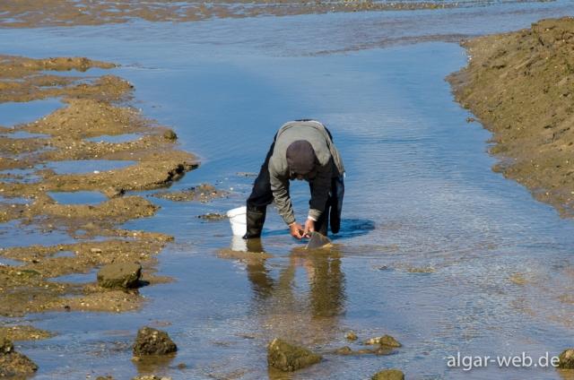 Muschelsucher in der Ria de Alvor, Alvor, Algarve, Portugal