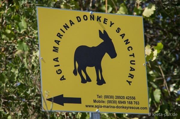 Agia marina donkey rescue 2188
