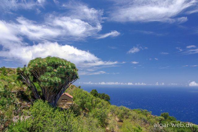 La Palma - Impressionen