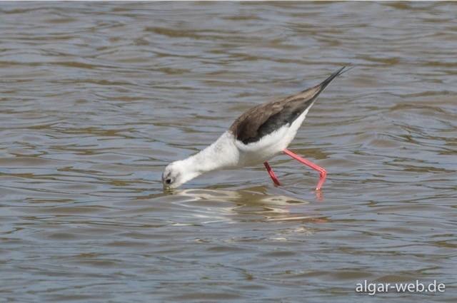 Unterschiedlichste Wasservögel am Wegesrand